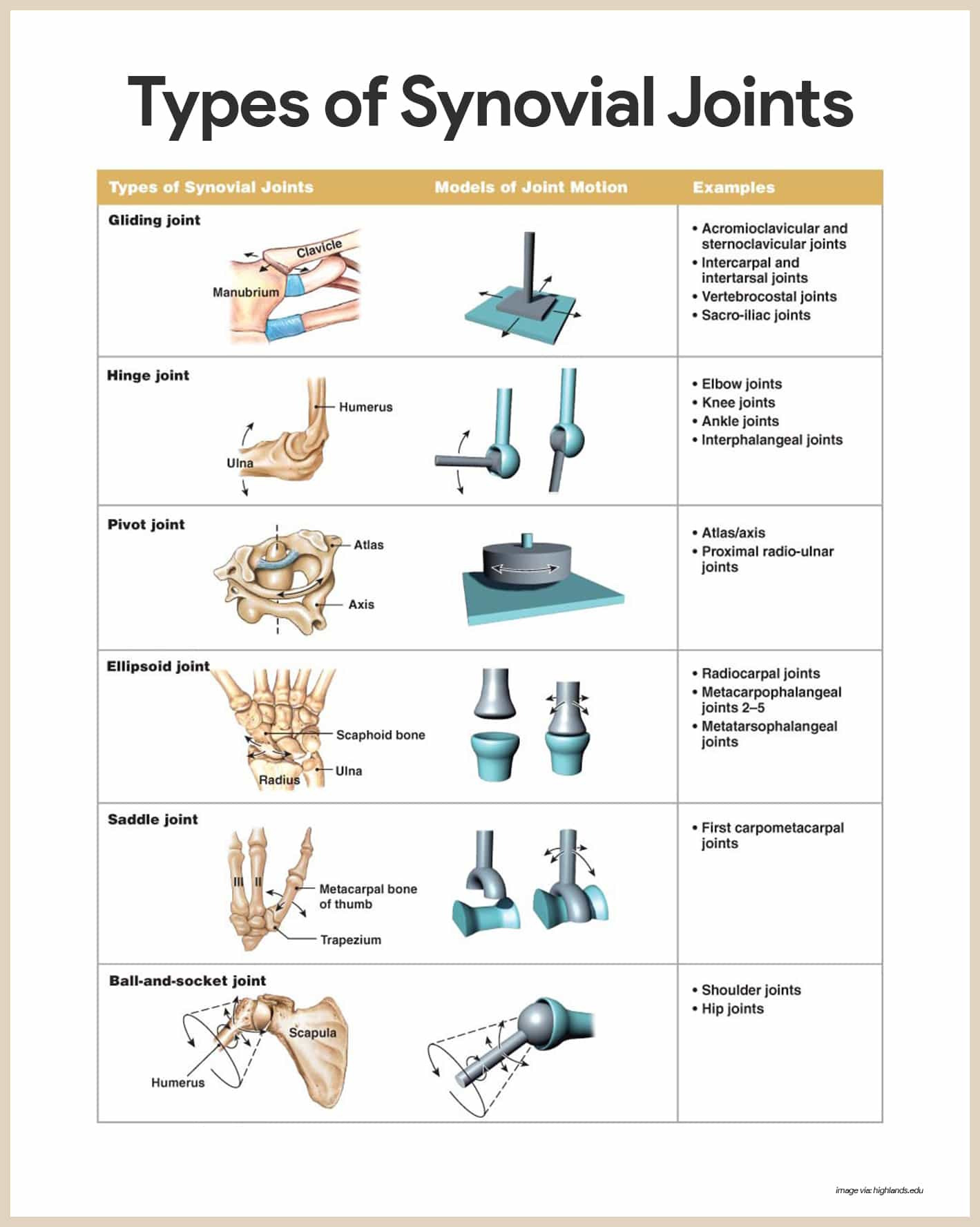 Joints Worksheet Answers
