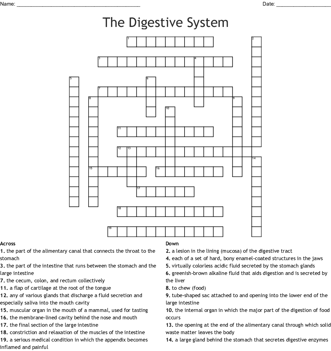 The Digestive System Word Search Word