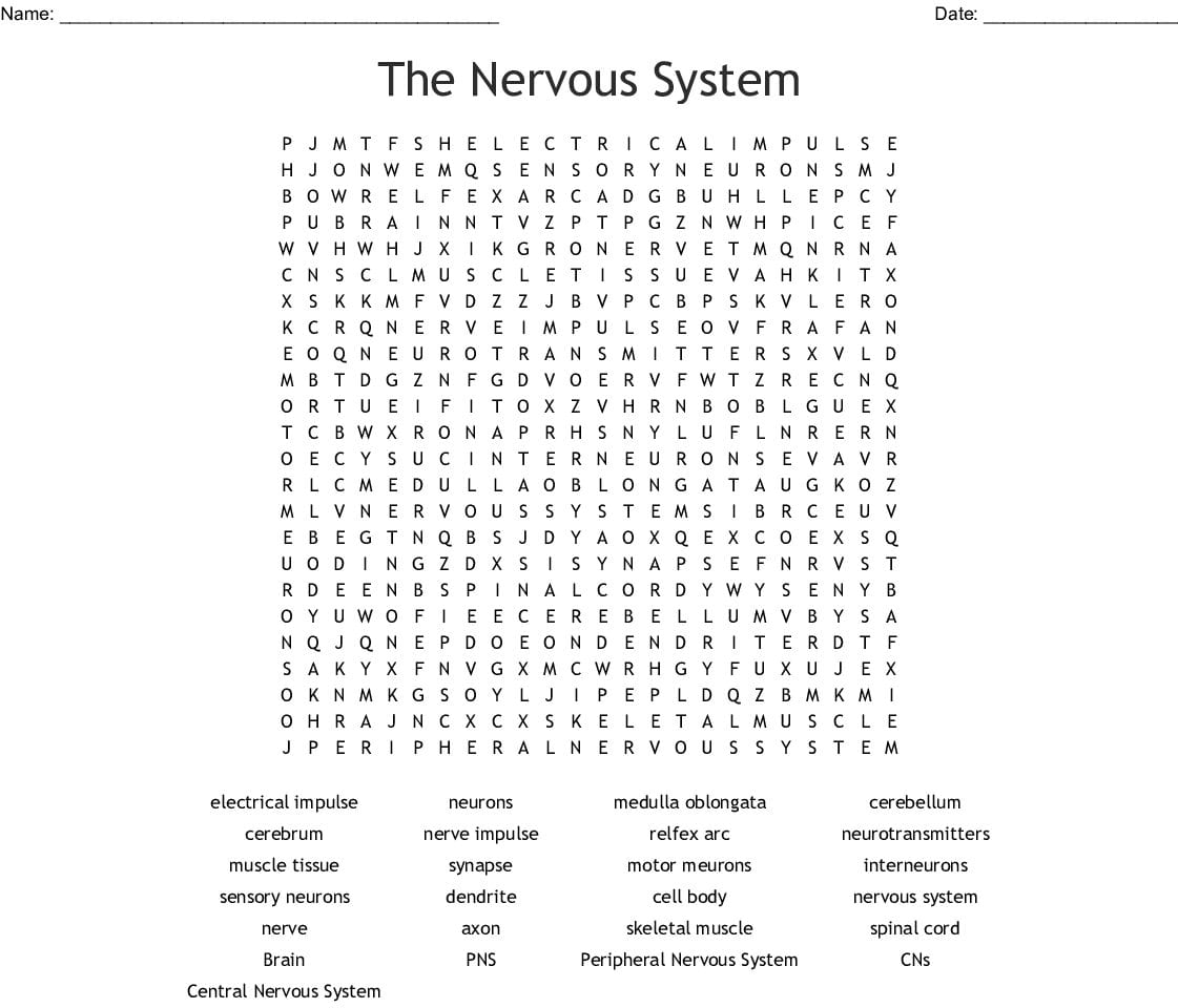 Chapter 7 The Nervous System Worksheet Answers