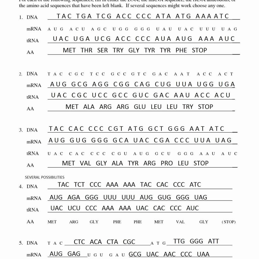 Transcription And Translation Worksheet Wiring Diagram