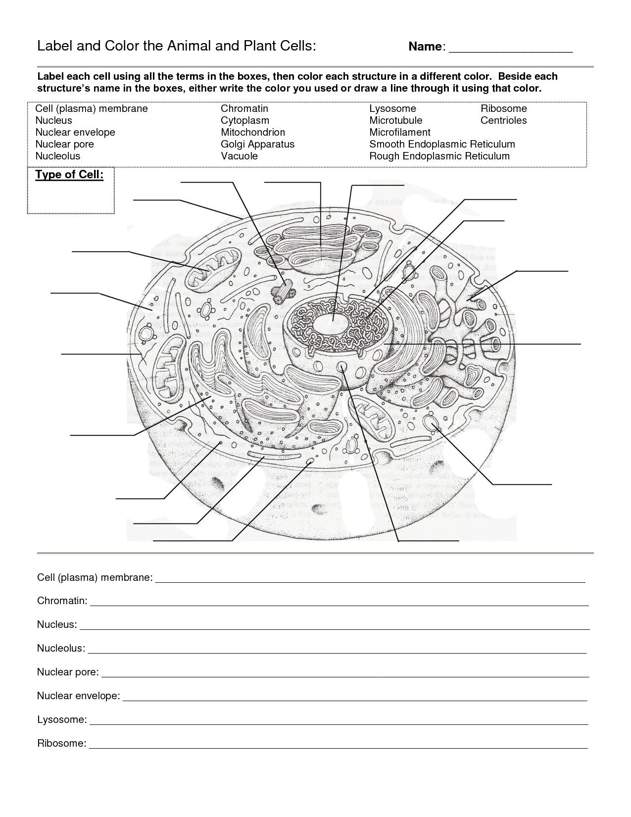 Worksheet Plant And Animal Cell Worksheet Diagram Plant