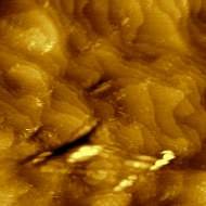 Atomic planes in gold. Constant-current mode, 1 nA, 50 mV bias.