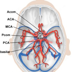 Brain Diagram Inside 500 Watts Power Amplifier Schematic Anatomy Of The Human Illustration Showing Circle Willis