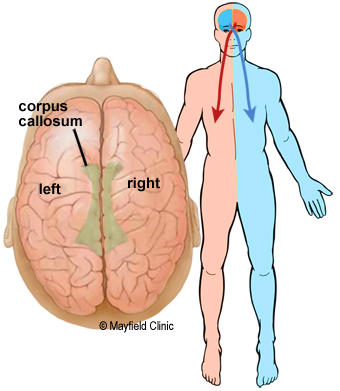 left side brain functions diagram 2 ohm sub wiring anatomy of the human and right hemispheres