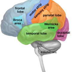 Left Side Brain Functions Diagram Cat5e Wiring B Anatomy Of The Human Lobes
