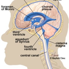 Left Side Brain Functions Diagram Mk1 Golf Cabriolet Wiring Anatomy Of The Human Illustration View Showing Ventricles Deep Within And Flow