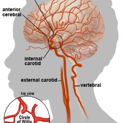 Vascular Anatomy Diagram Lower How To Wire A 3 Way Dimmer Switch Diagrams Moyamoya Disease Moya Mayfield Brain Spine Cincinnati Ohio Side View And Top Left Inset Of The S Blood Supply Common Carotid Artery Courses Up Neck Divides Into Internal