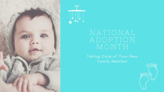 National Adoption Month: Taking Care of Your New Family Member