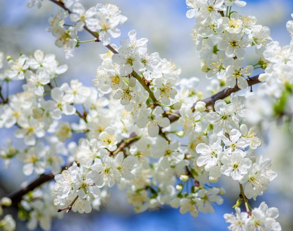 Spring Cleaning: Time to Clean Up Your Estate Planning