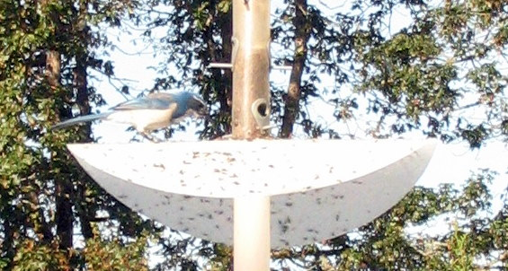 It Bird Yourself Feeders Proof Make Squirrel