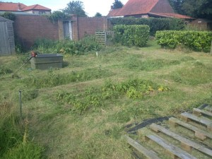 Allotment after strimming