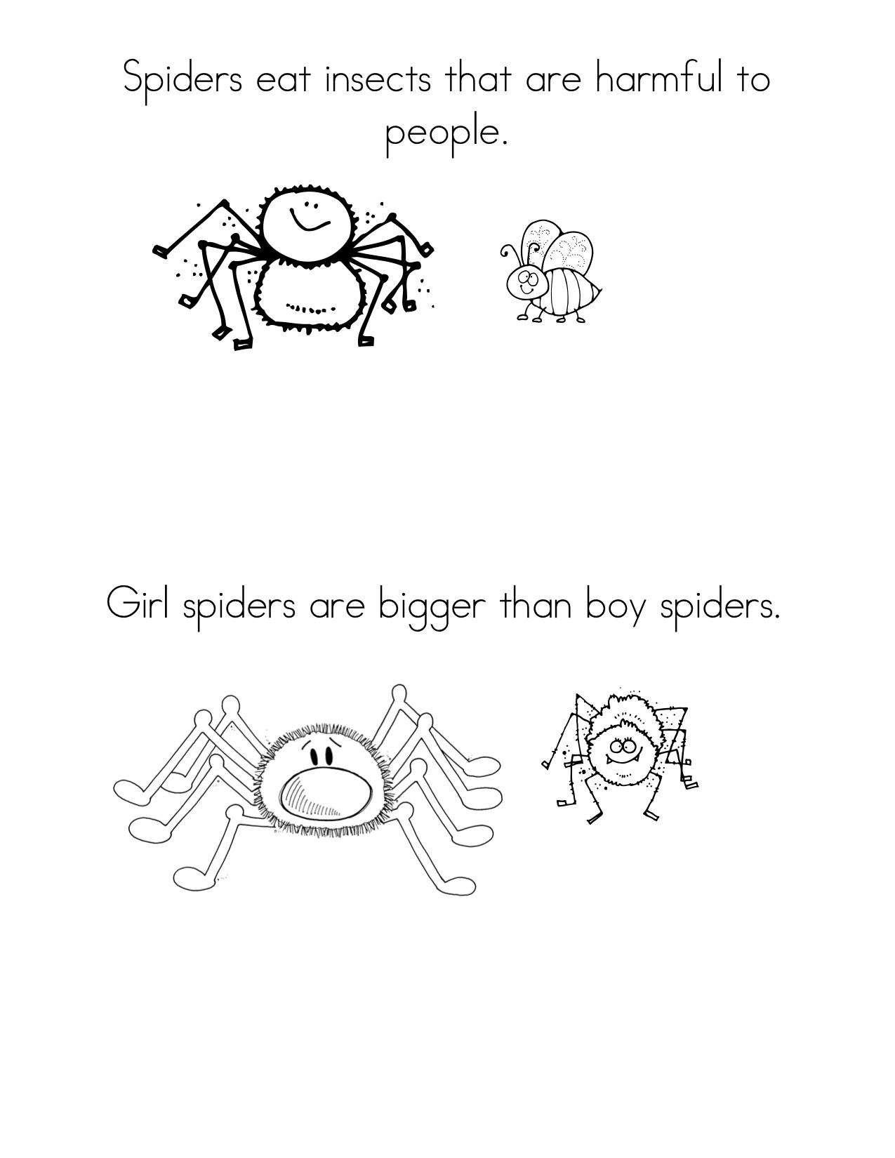 Spider Facts 1
