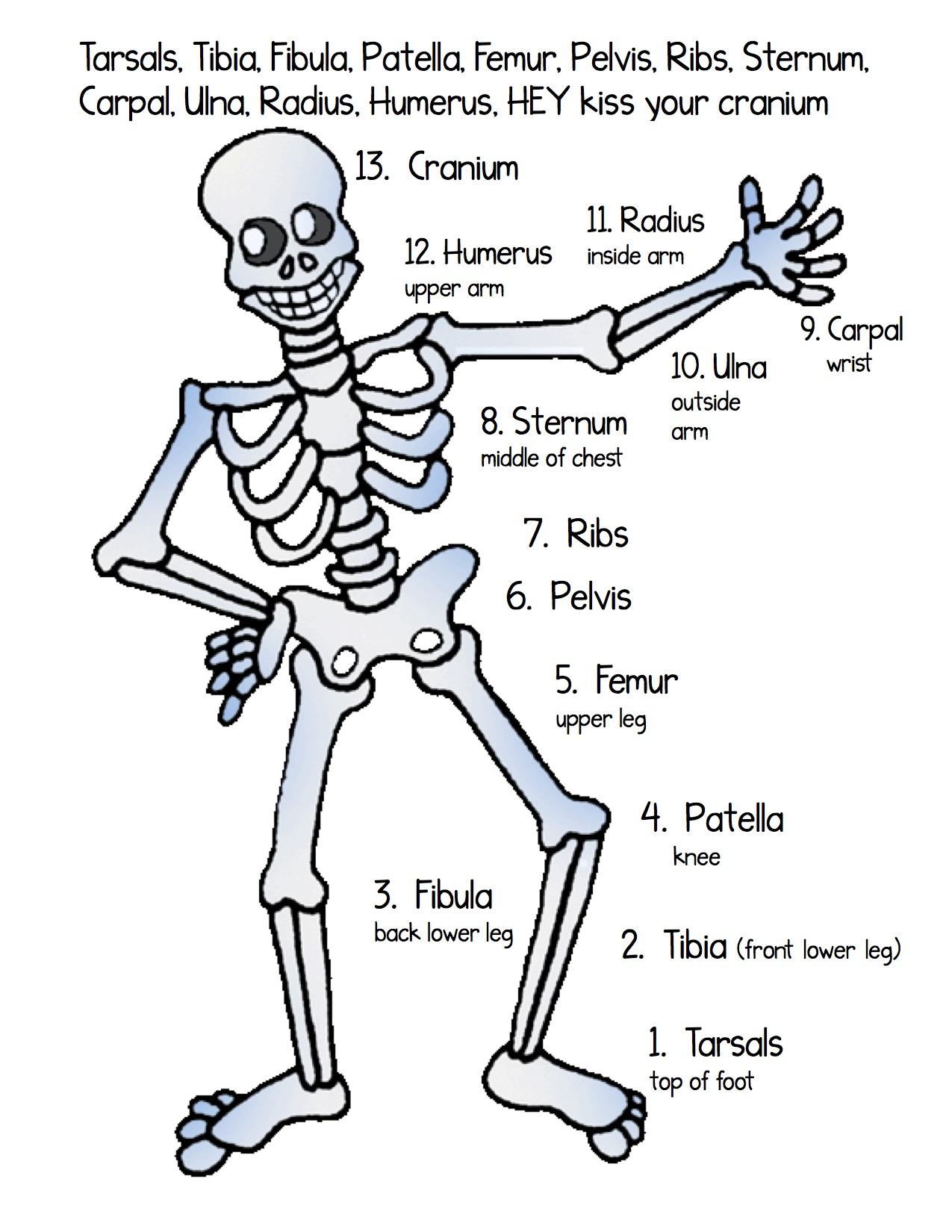 Bones Song