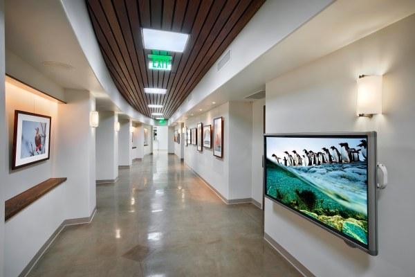 Zoo Corridor Wide Art Bagsc