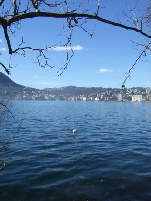 Lago di Lugano, im Hintergrund Lugano und im Mittelgrund der Schwan.
