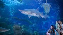 Florida Aquarium Hotels Westin Tampa Harbour Island
