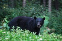 Bears!!!