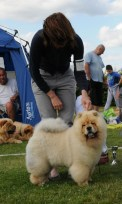 Chow Chow hvalp ORINELL´S ON AND ON på sommerskue 2015