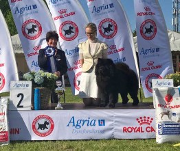 Chow Chow Best In Show Piuk Chow Possesses Black Passion Stine Hjelme Christine Rossier