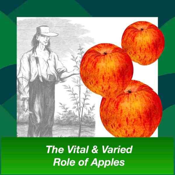 apples sq