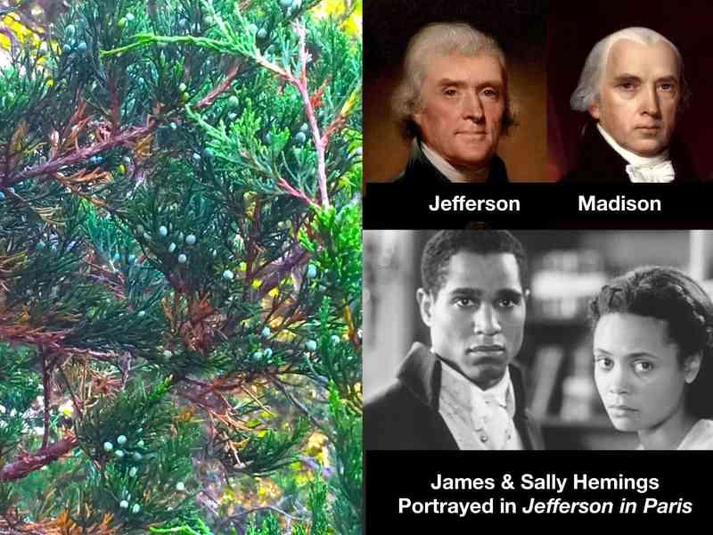 JEFFERSON, MADISON, HEMINGS