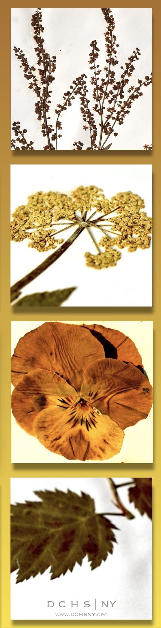 Herbarium Column 03