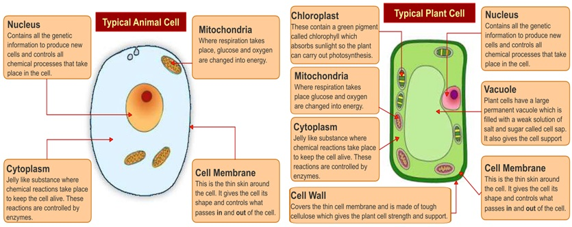 plant cell diagram with labels rj11 wall socket wiring australia easiest way to memorize the animal and structure pic