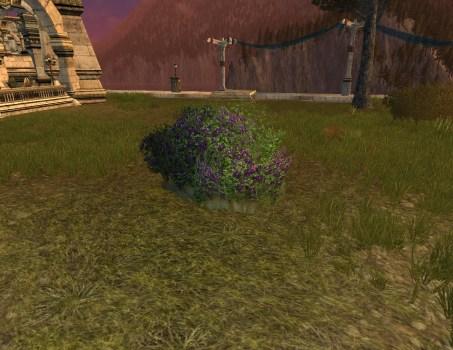 Buisson de Clématites