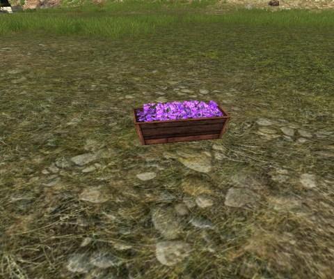 Jardinière Surélevée de Violettes