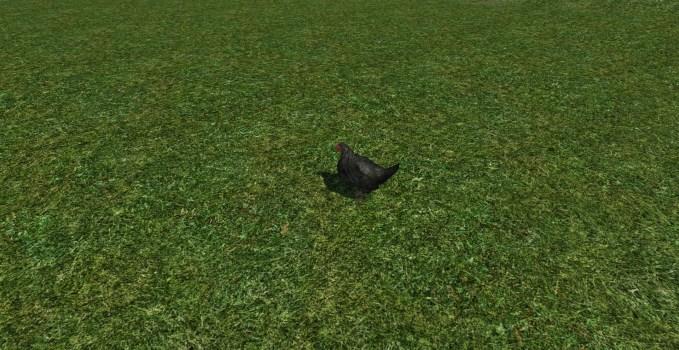Poulet de pelouse à pattes noires