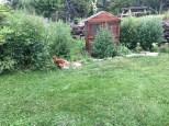 Alpagas des appalaches