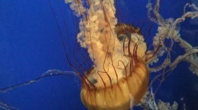 Aquarium Vancouver