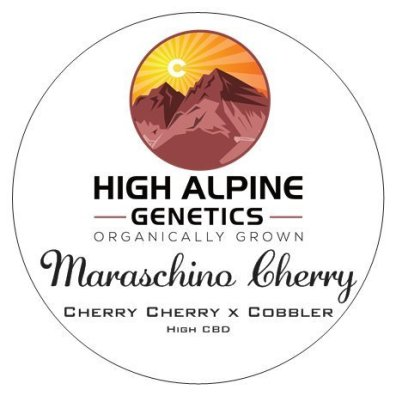 Maraschino Cherry F1 (Cherry Cherry x Cobbler) 10 Regular High CBD Seeds