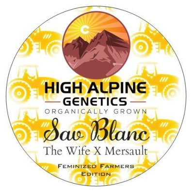 Sav Blanc (The Wife x Mersault) 10 Feminized High CBD Seeds