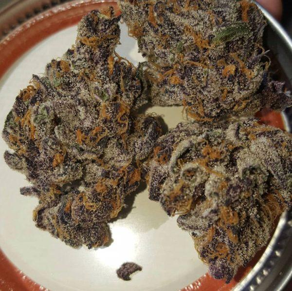 Tropicanna Cookies F2 (Tropicanna Cookies F1 x Tropicanna Cookies F1) 12 Regular Seeds