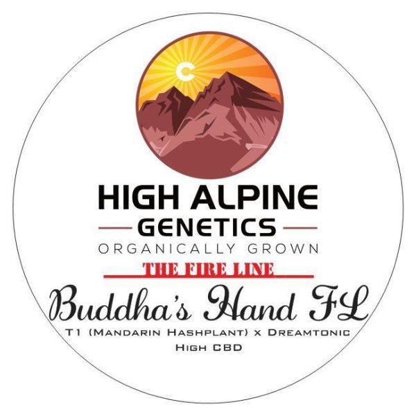Buddha's Hand FL (T1 x Dream Tonic) 10 Regular High CBD Seeds