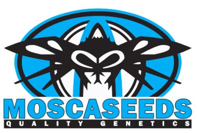 Muddy Waters (ChemD OG x Fire Alien White) 12 Regular Seeds