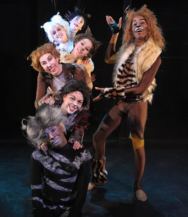 Cats from here, cats from there. The cast of Cats. (Photo: Stan Barouh)