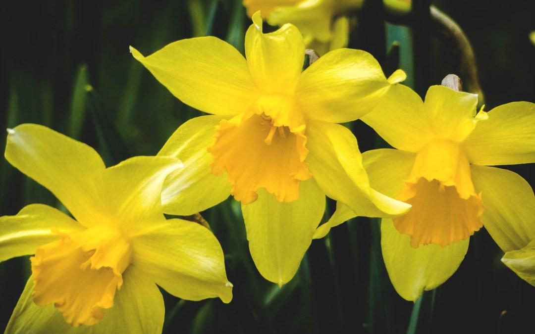 spring-planning-featureimage