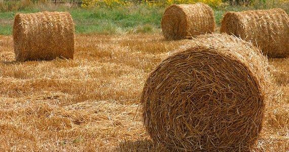 Curso de Biomasa para Generación de Energía + Gas B