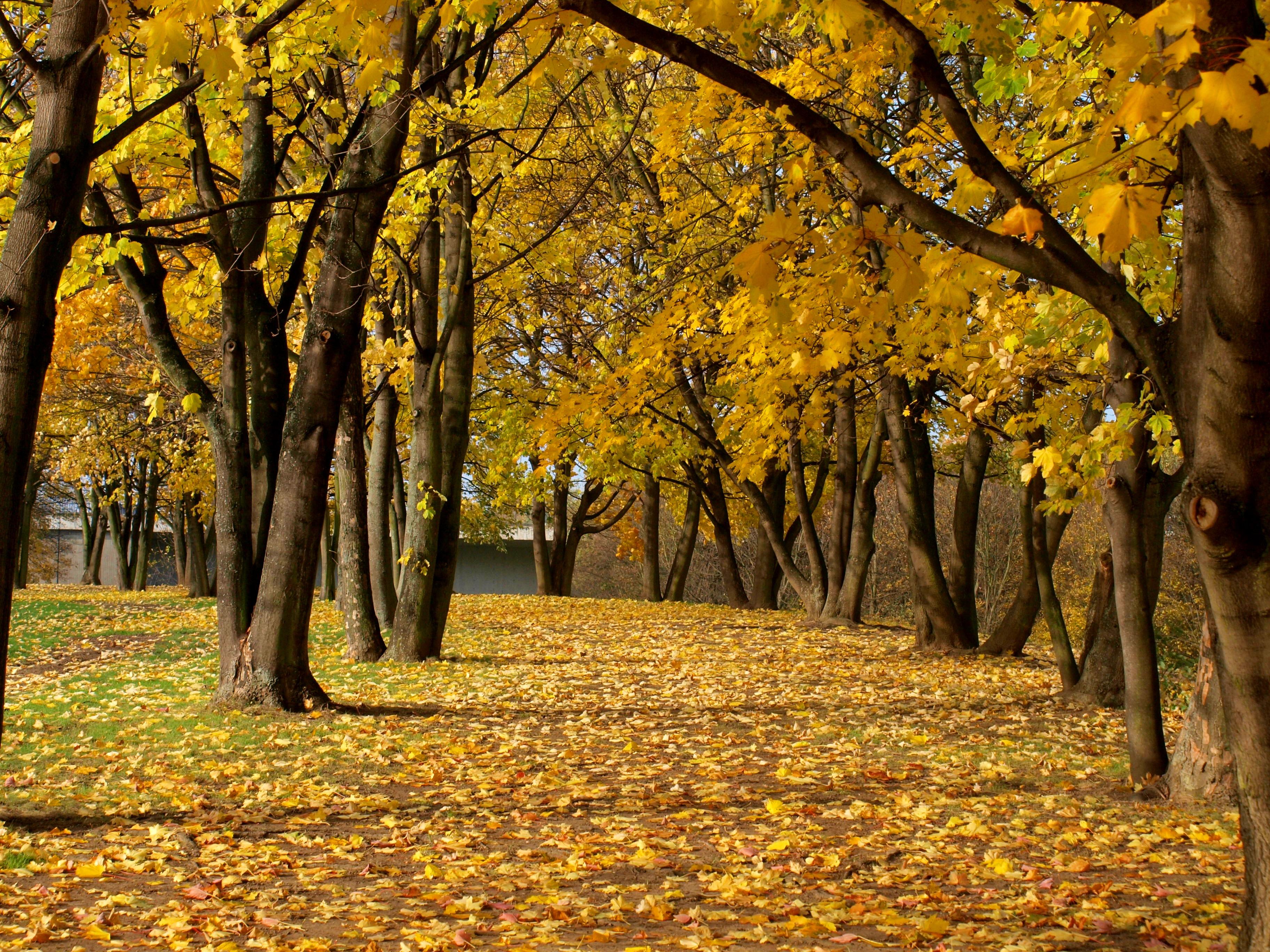 Central Park Fall Wallpaper Rheinaue In Autumn Daniel In Germany