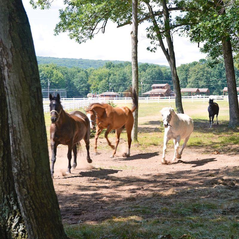 Photo of horses running