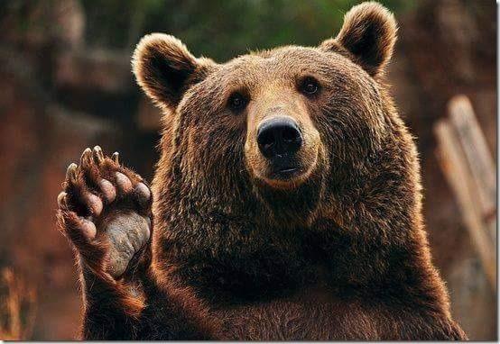 La médecine de l'Ours !