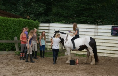 Video ponykamp 2014