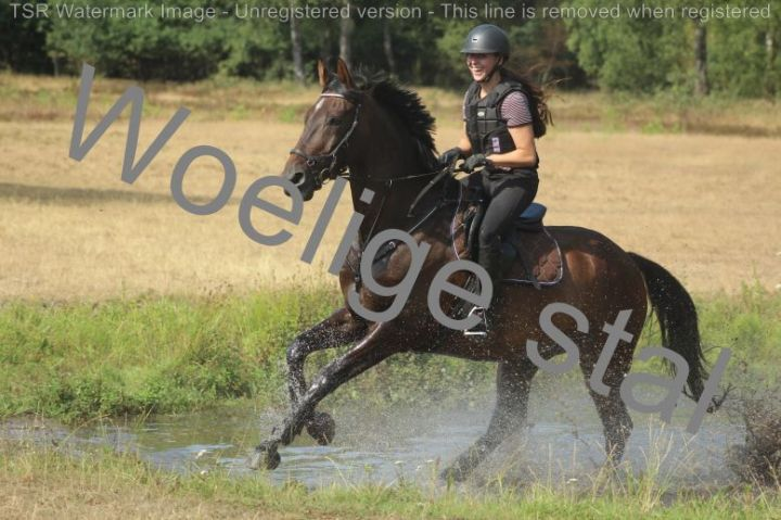 Trainingskamp 2018 Manege de Woelige Stal Ede