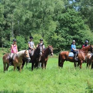 Video ponykamp 2015