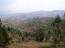 Mille Collines
