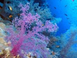 Geschenke des Meeres für Ihre Gesundheit & Schönheit