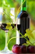 Spanische Weine auf der Biofach 2006