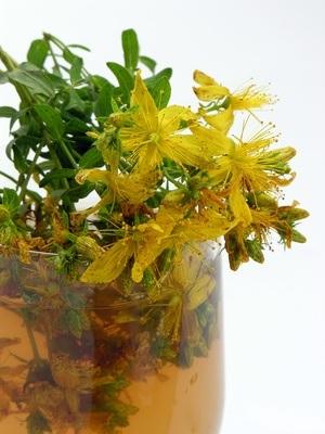 Hypericum : Die Pflanze für die gute Laune